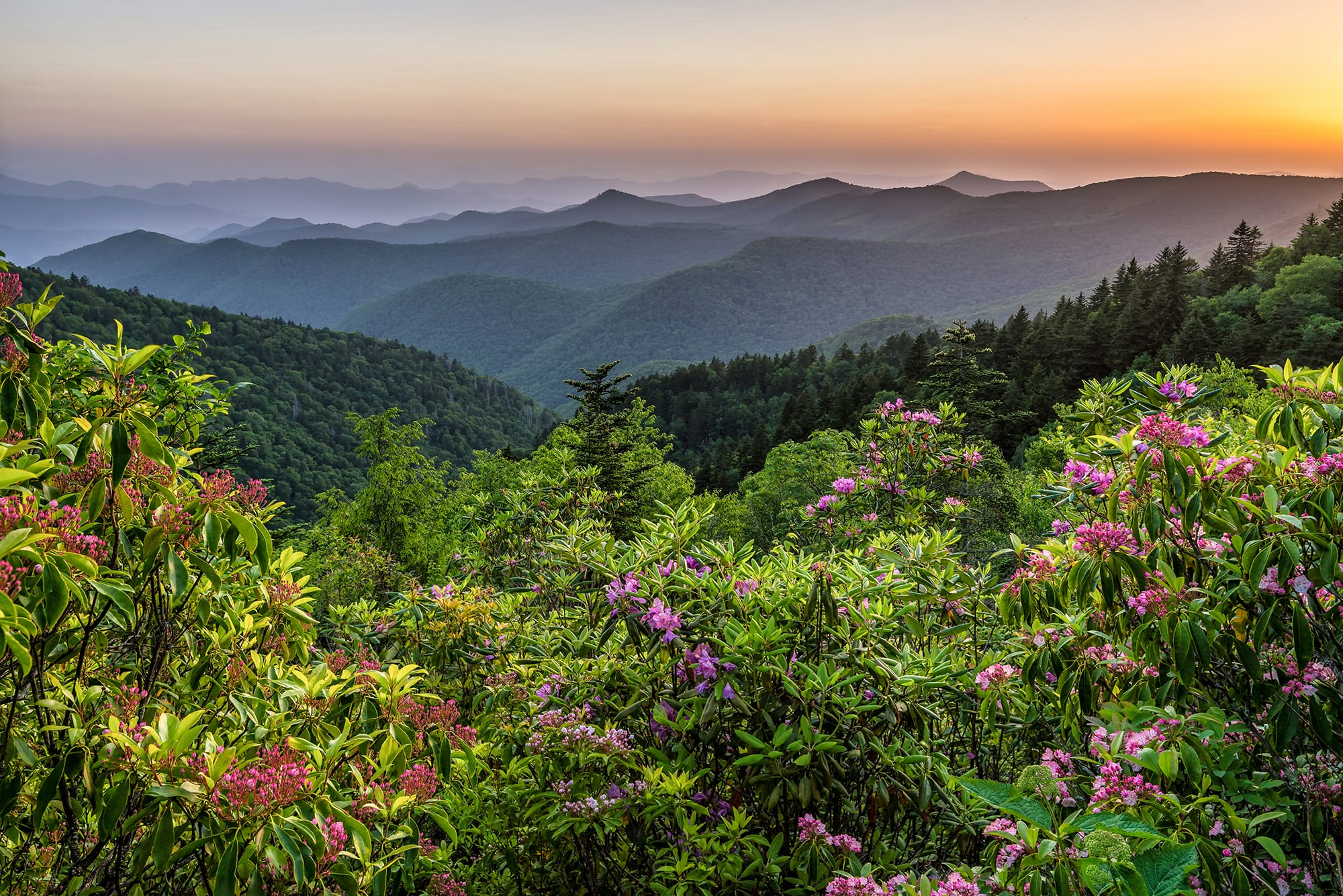 Overlooking rhododendron filled mountains