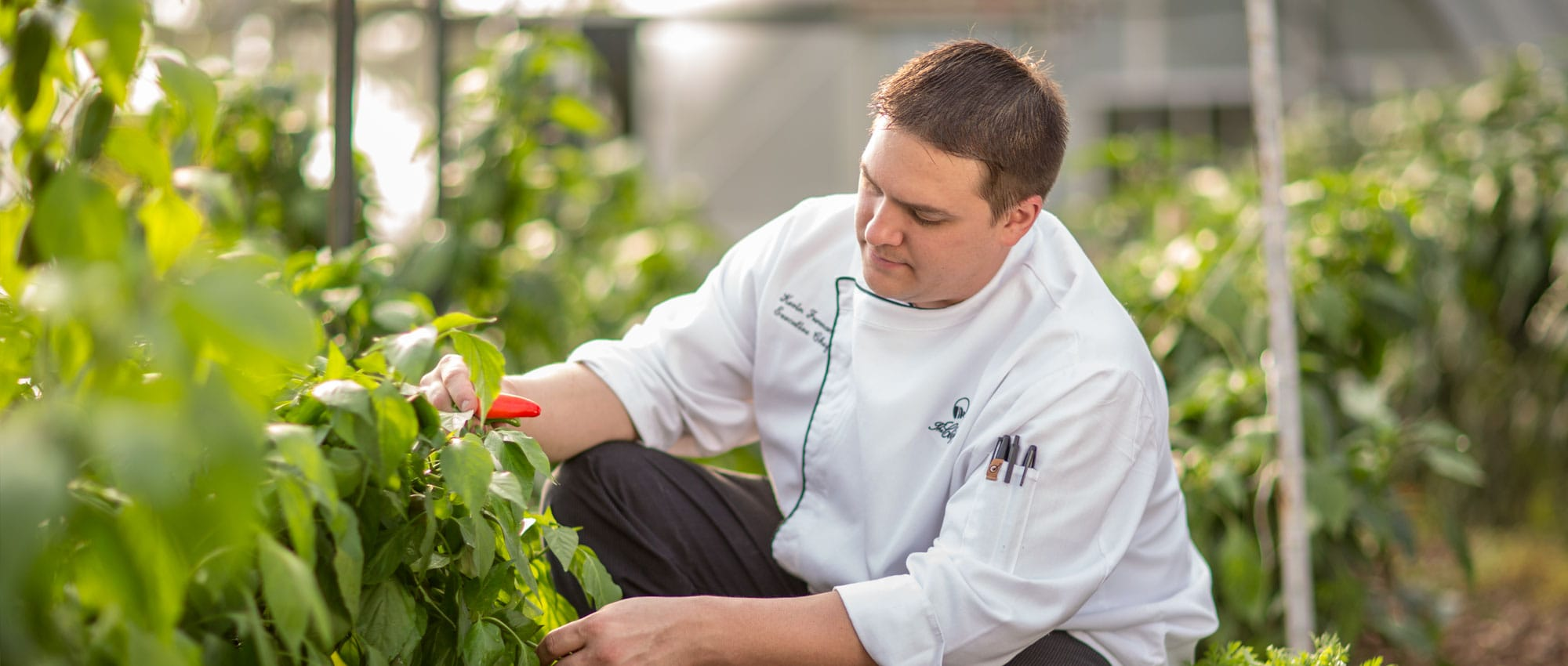 Executive Chef Kevin Furmanek picking peppers in the garden